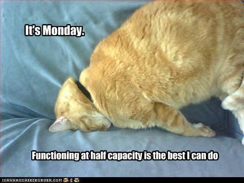 MondayCat